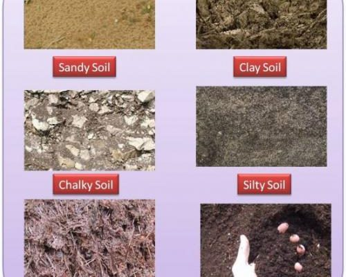 soil-types_of_ india