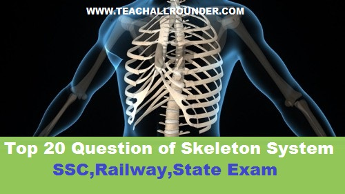 Top 20 Question of Skeleton System