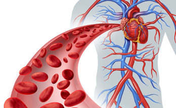 importance-of-blood-in-the-human-body